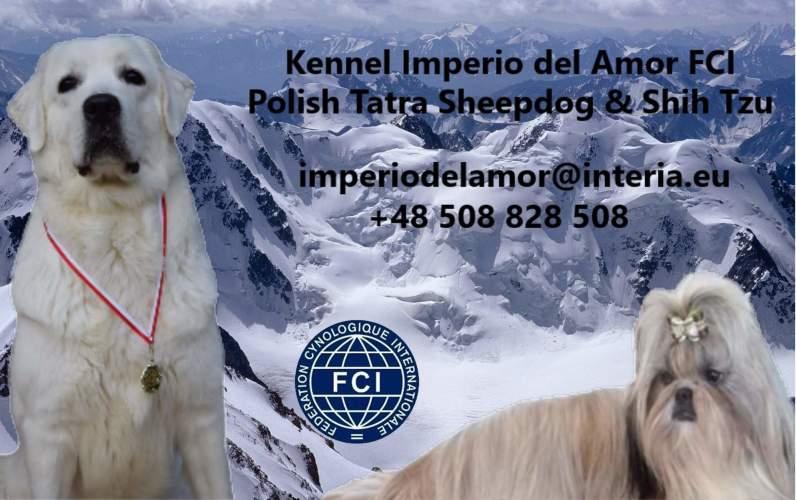 Imperio del Amor (FCI)